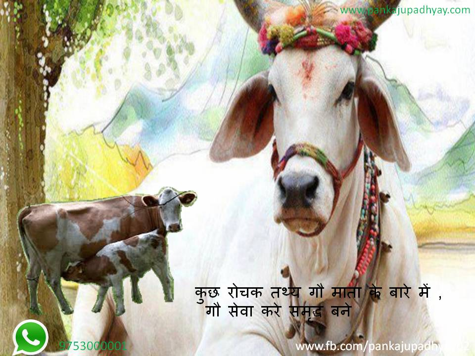 Know Our Mother Cow …